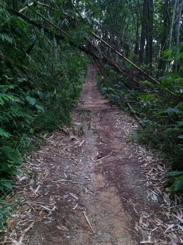 Going up hill in Gunung Nuang trail